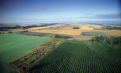 Compag: Farm to Fork? A rischio l'autosufficienza della UE senza vantaggi per il clima