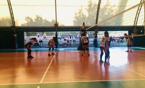 """Volley Club Frascati, che entusiasmo! Musetti: """"Boom di richieste per le nostre squadre giovanili"""""""