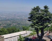 Tre alberi di Rocca Priora entrano nell'Elenco degli alberi monumentali d'Italia